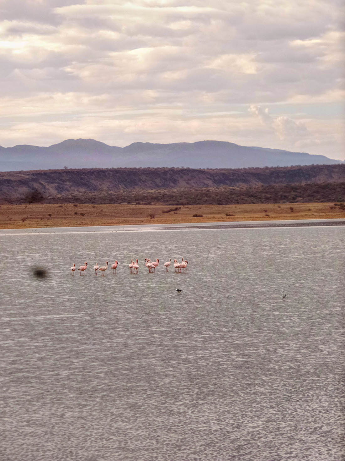 Lake Magadi_Flamingoes