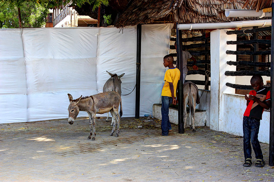 The donkey sanctuary, a unique concept only found in Lamu