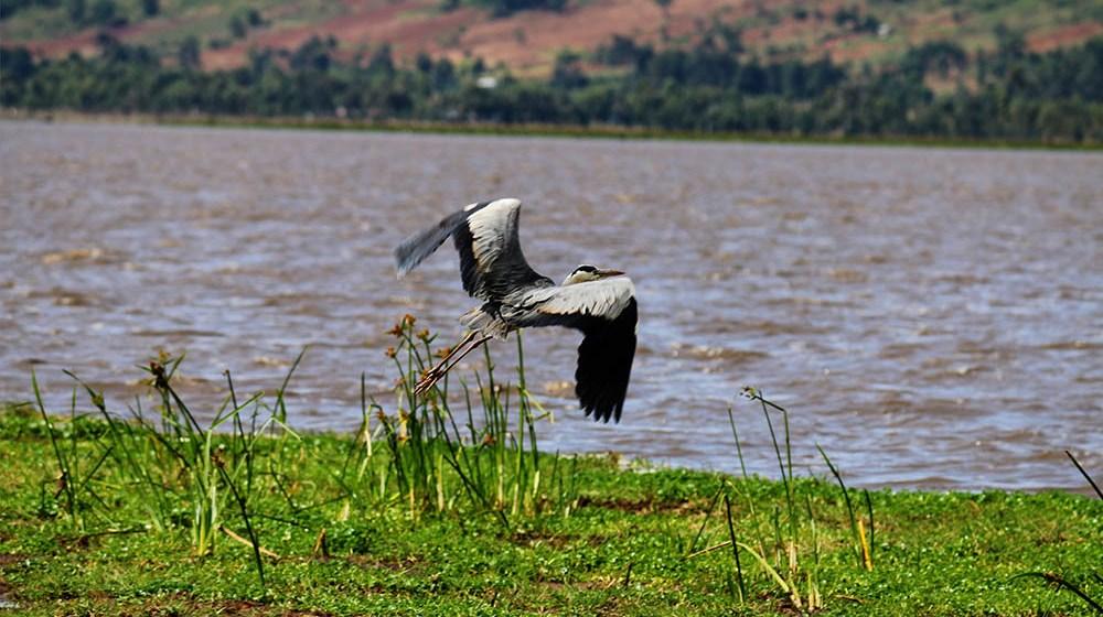Lake Olbolossat_Bird in flight1