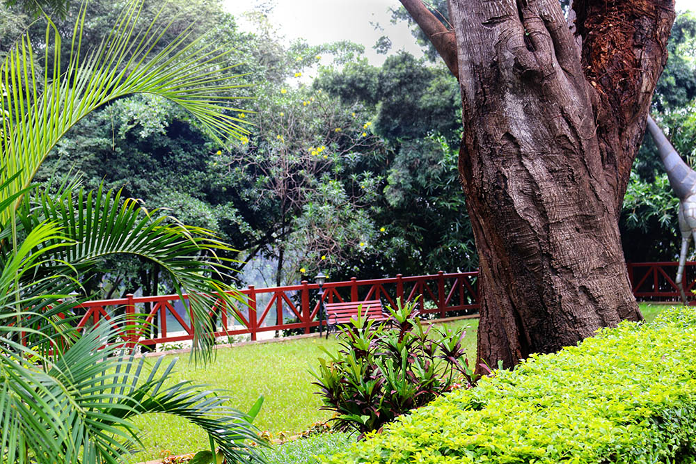 Flame Tree Restaurant_gardens 2