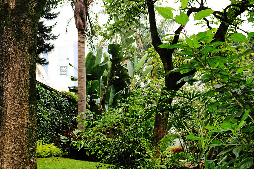 Flame Tree Restaurant_gardens 5