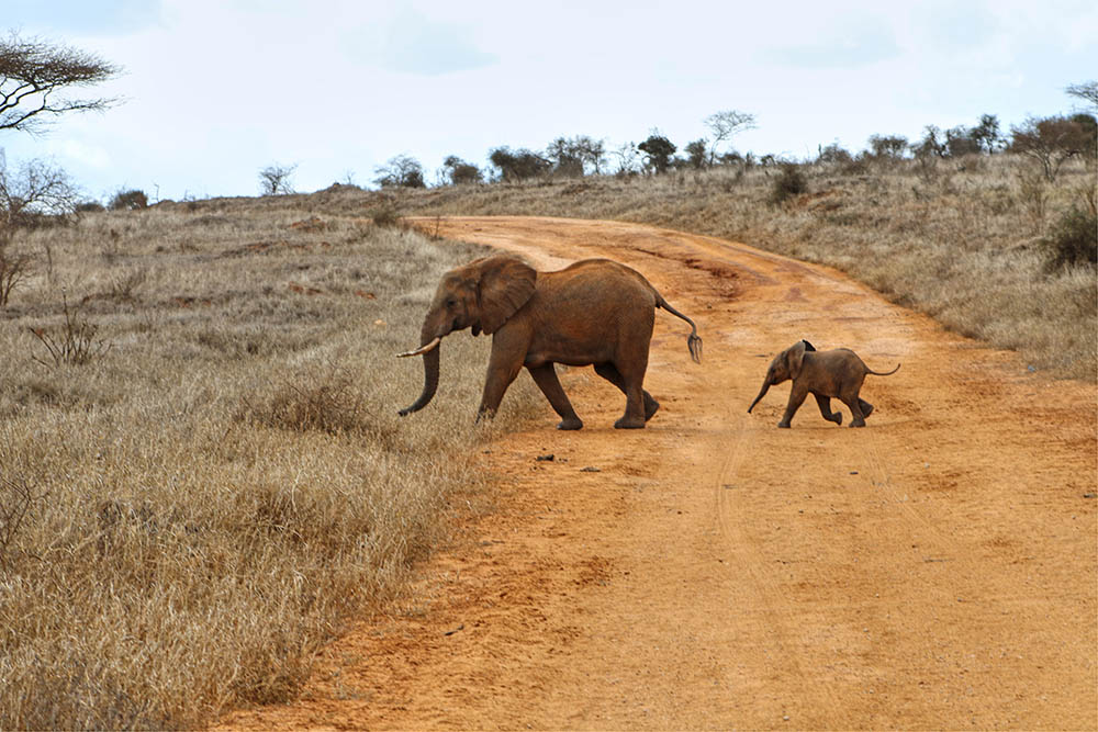 taita-hills-game-reserve_elephants-crossing