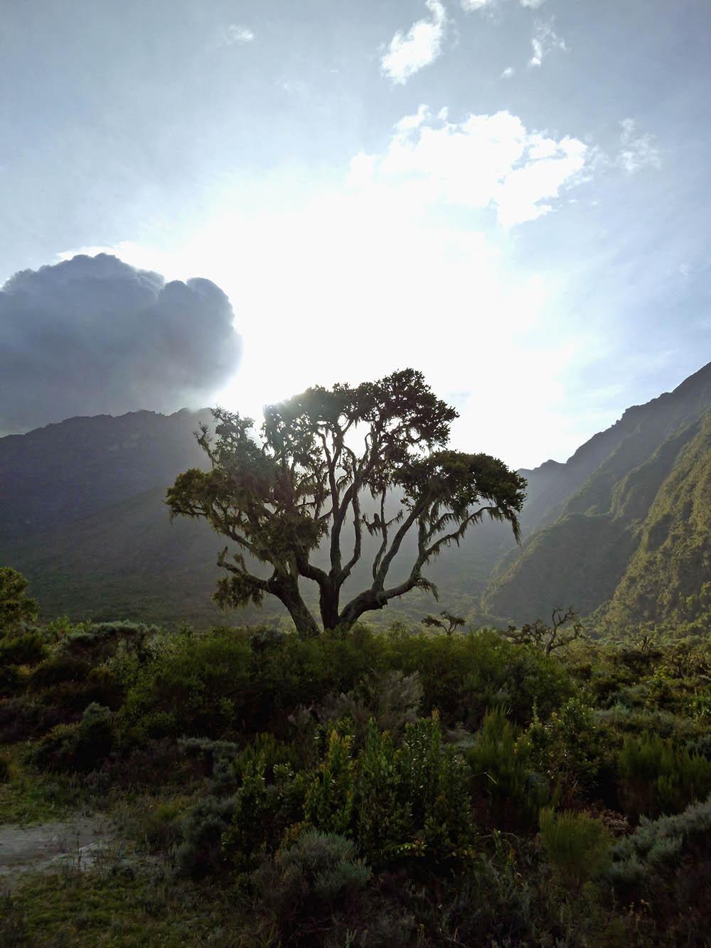 mt-meru_vegetation-3