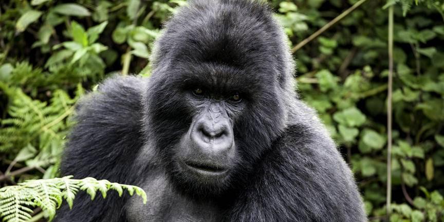 safari-in-rwanda_muzane_05