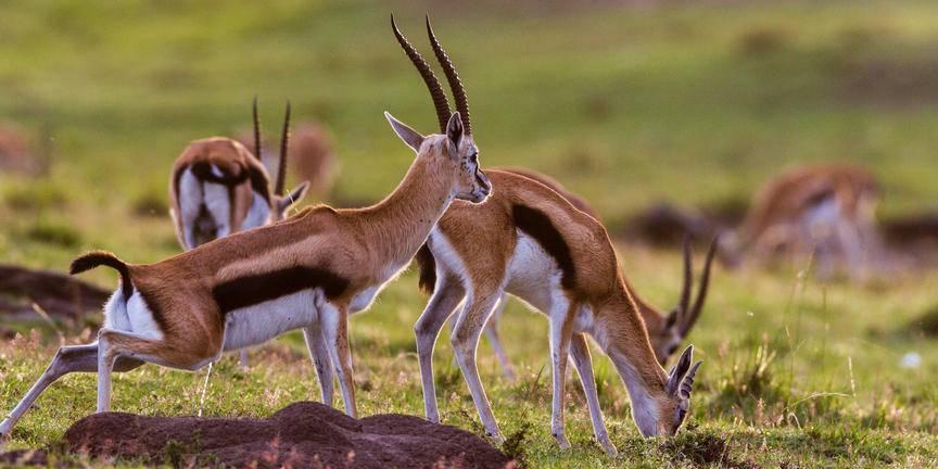 safari-in-tanzania-arusha_05