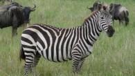 Camping Safari Serengeti Ngorongoro