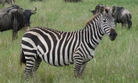 4 Day Safari Serengeti Ngorongoro Tarangire