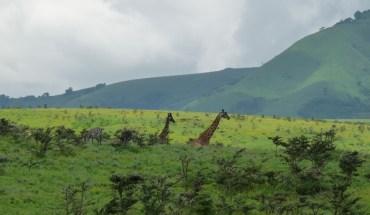 Camping Safari Serengeti