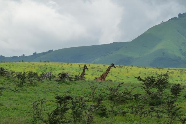 6 Day Camping Safari Ngorongoro Tarangire Manyara Serengeti