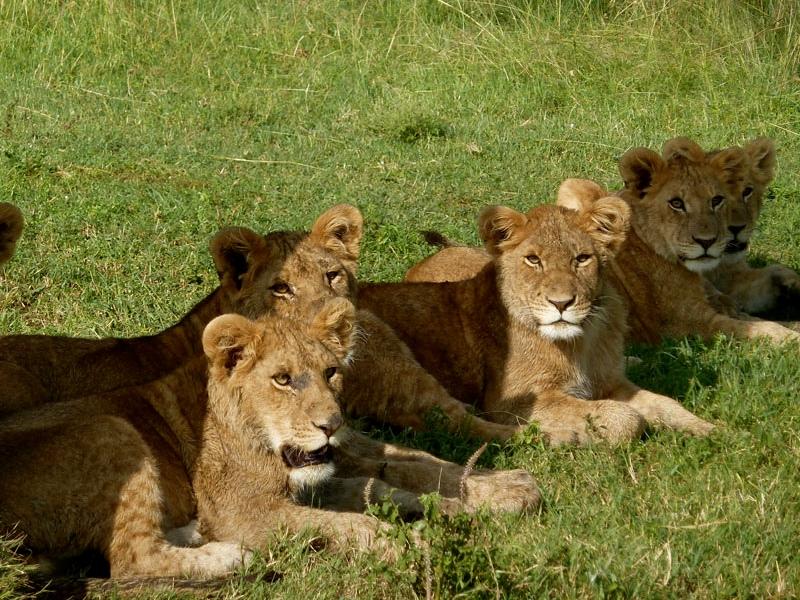 7 Days Tanzania Lodge Safaris