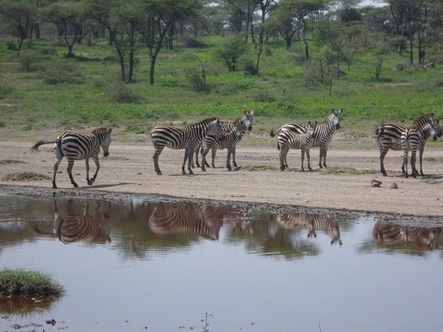 Tanzania 4 Days Camping Safari Serengeti, Ngorongoro