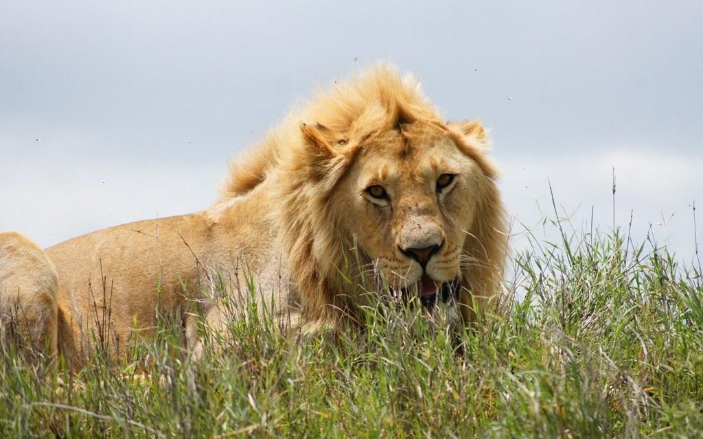 11 Days Safari Serengeti Ngorongoro