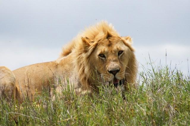 Ngorongoro Safari Tour