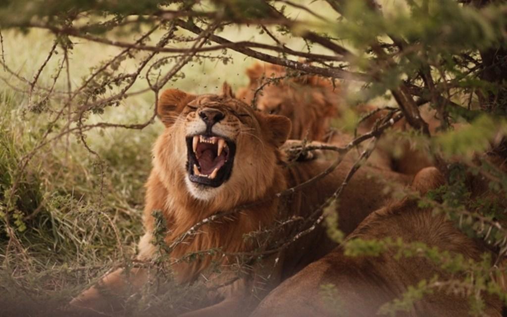 4 Days Tours Serengeti Ngorongoro