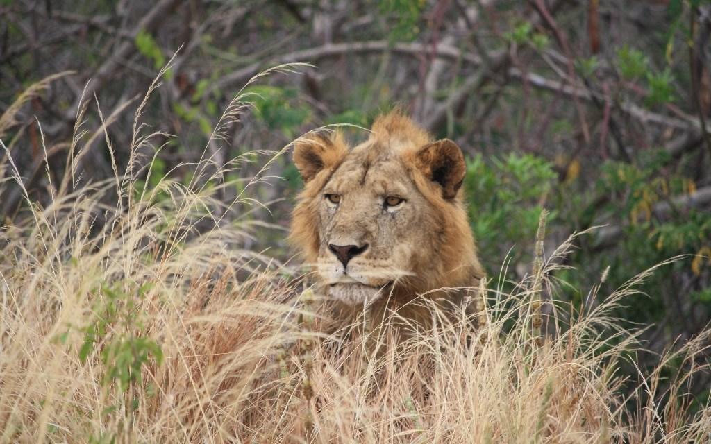 4 Days Lodge Safari Ngorongoro Serengeti Tarangire