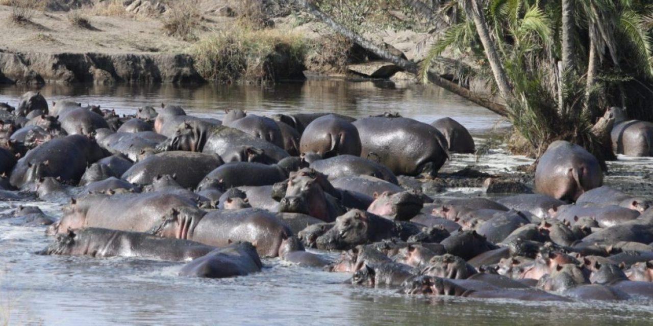6 Day Tanzania Budget Holiday Safari