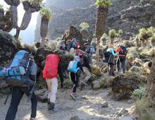 Rongai Route 7 Days Kilimanjaro Climbing