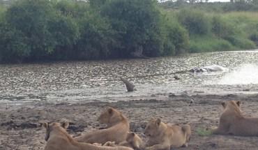 Safari Nairobi Maasai Mara