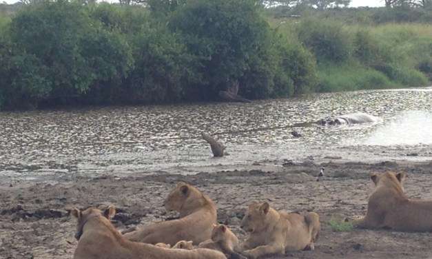 5 Days Lodge Safari Nairobi Maasai Mara