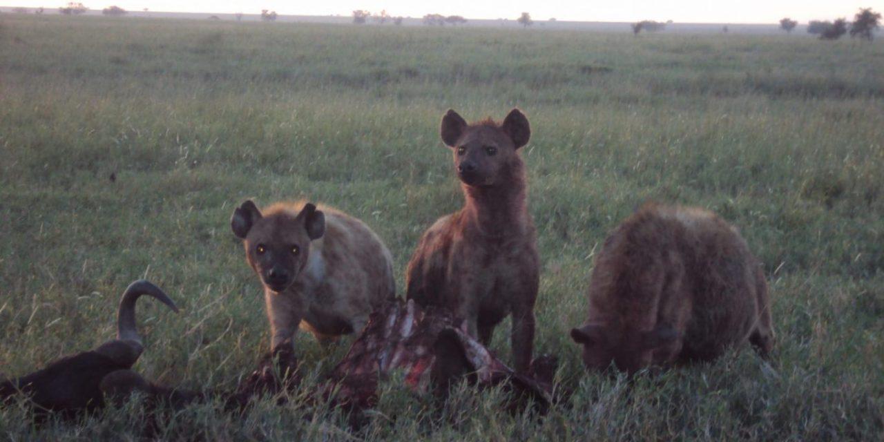 7 Days Camping Safari Serengeti Ngorongoro Crater