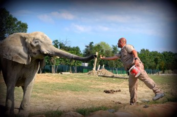 area safari (3)