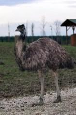 Emù - Safari Ravenna