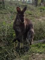 canguri (7)