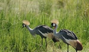 16 Days Uganda Primate, Wildlife, Adventure and Culture Safari