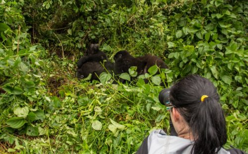 8 Days Uganda Mountain Gorilla Safari