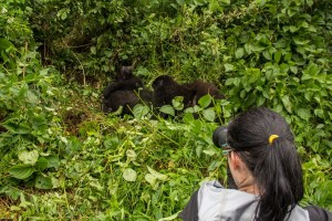 8 Days Uganda Mountain Gorilla Safari