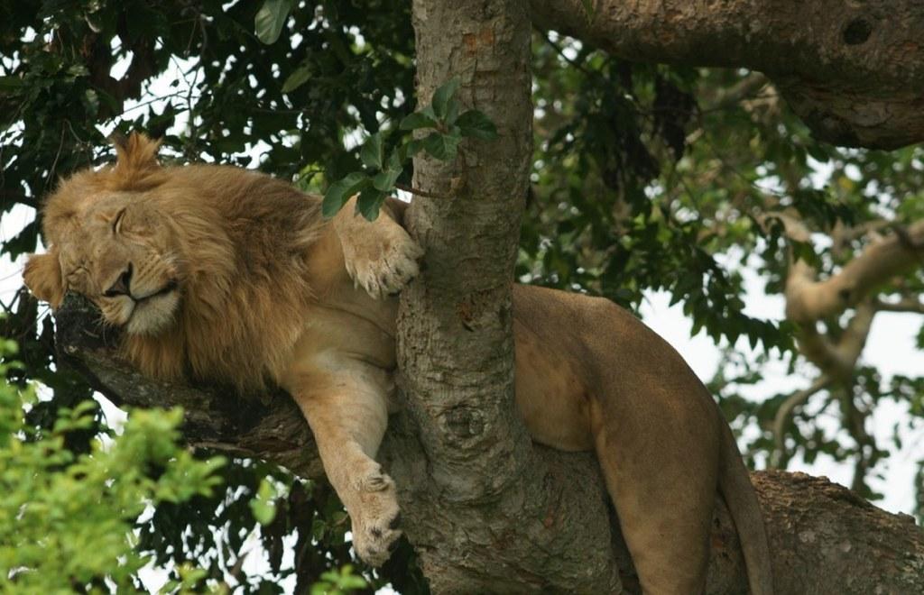 3 Days Queen Elizabeth Wildlife Safari Uganda