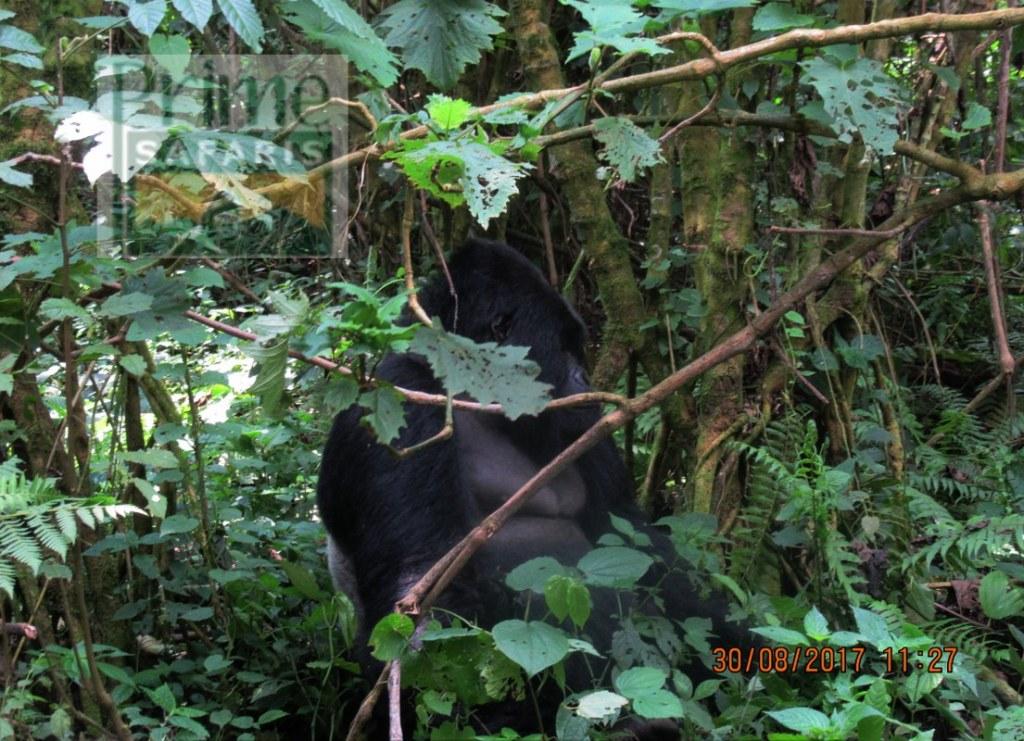 5 Days Rwanda Uganda Gorilla Safari
