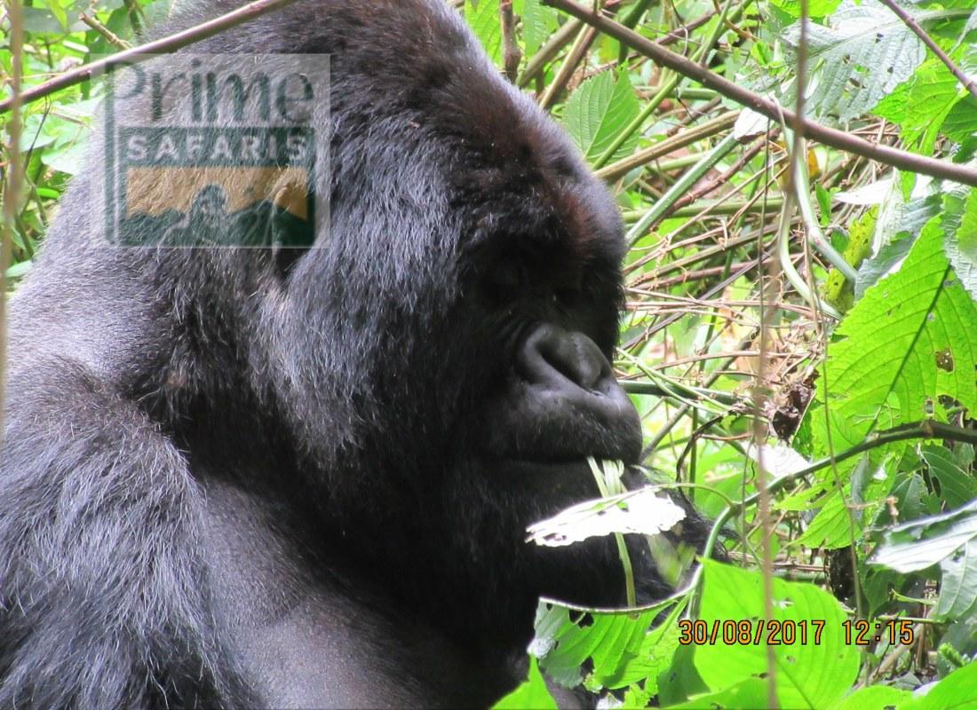 18 Days Rwanda Uganda Safari