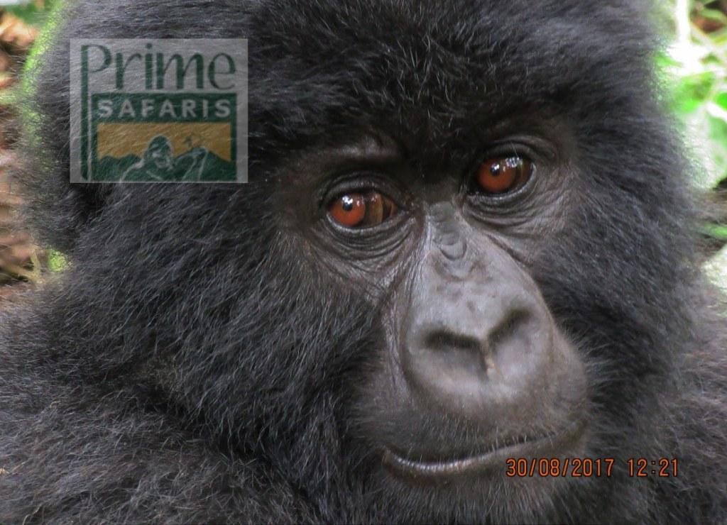 10 days Rwanda Gorilla Safari