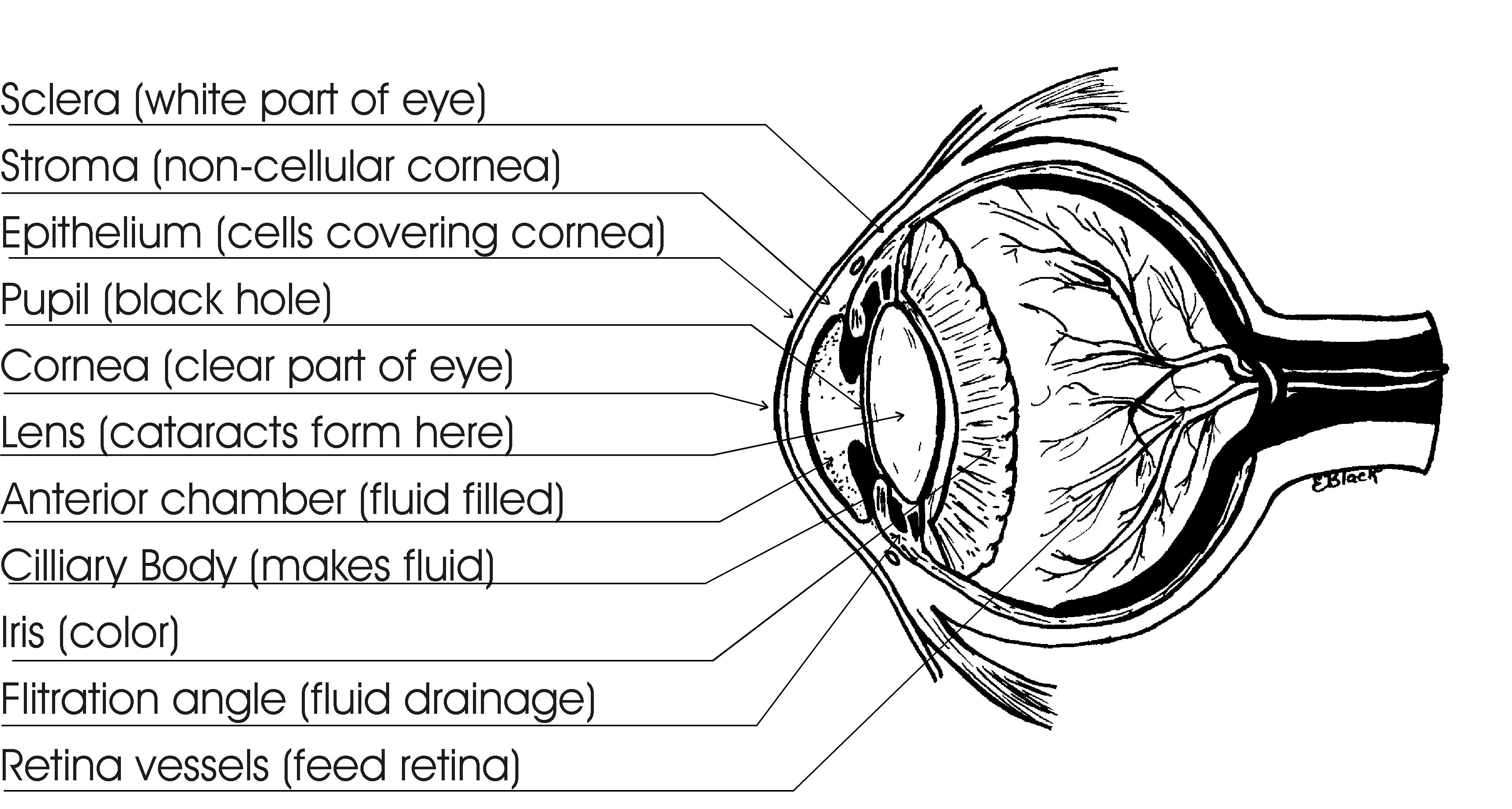 Pet Eye Disease