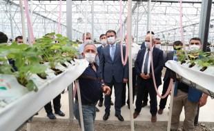Vali Dr. Ozan Balcı Topraksız Akıllı Çilek Üretim Sahasında İncelemelerde Bulundu