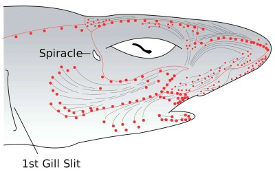"""Shark-Like Approach to Safety: The """"Sixth-Sense"""" for Electrical Detection"""