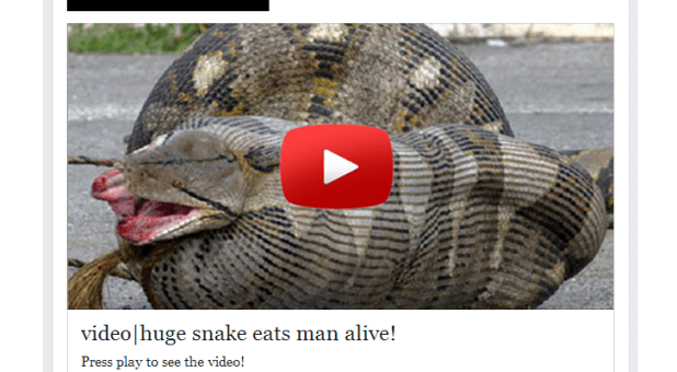 Man-Eating-Snake-Scam-Hits-Facebook-Spreads-to-Twitter.jpg