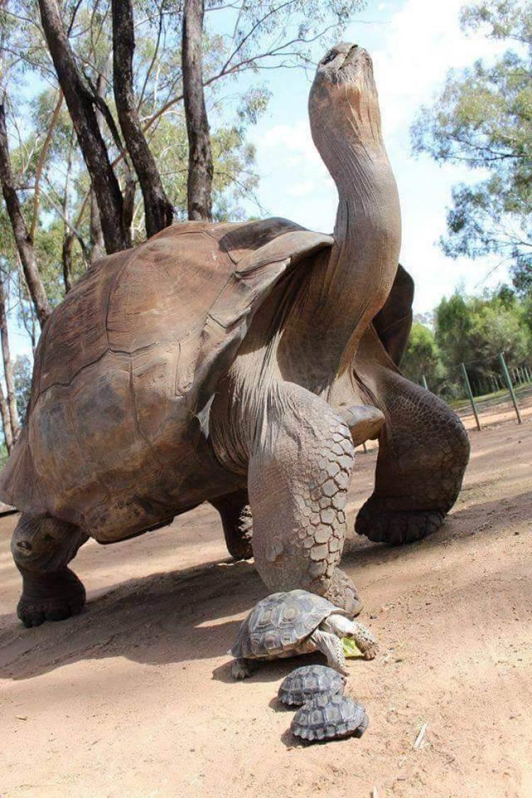 kura kura terbesar di dunia