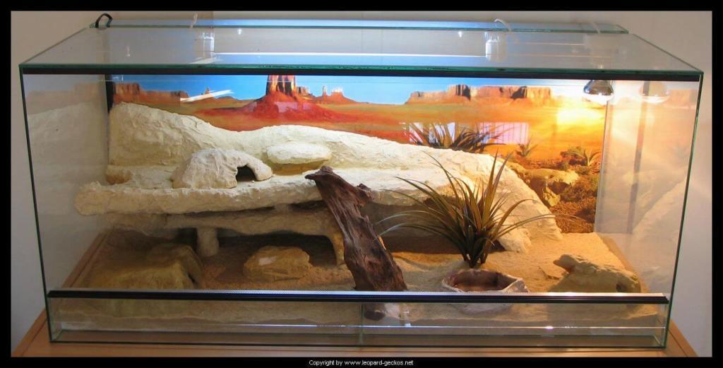 merawat gecko dengan memberinya kandang representatif