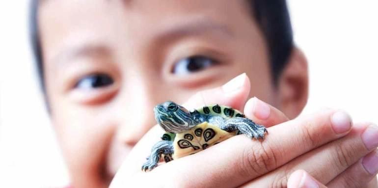 anak dan kura kura