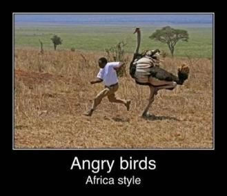 south-african-humour