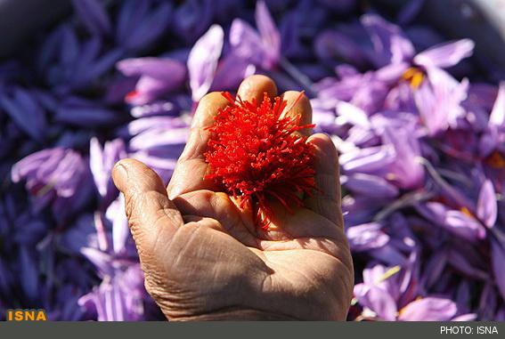 خاصیت زعفران,زعفران,فروش زعفران,صادرات زعفران,زعفران عمده,زعفران سرگل,زعفران بسته بندی,زعفران قائنات,زعفران پوشال,زعفران قیمت