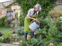 Starting a vegetable garden - Saga