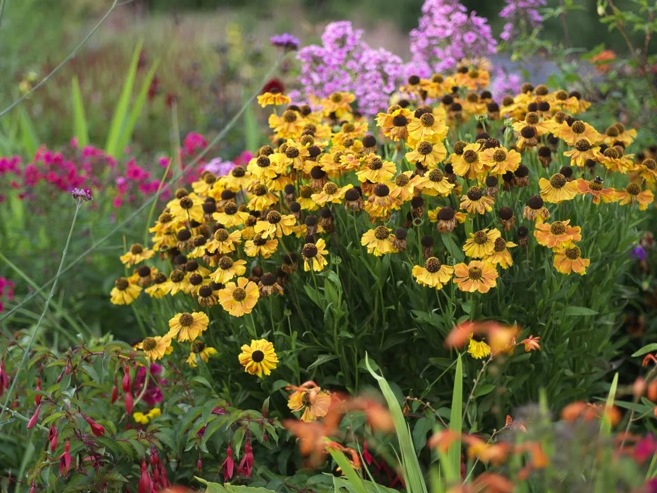 Top Ten Flowers For An Autumn Border Saga