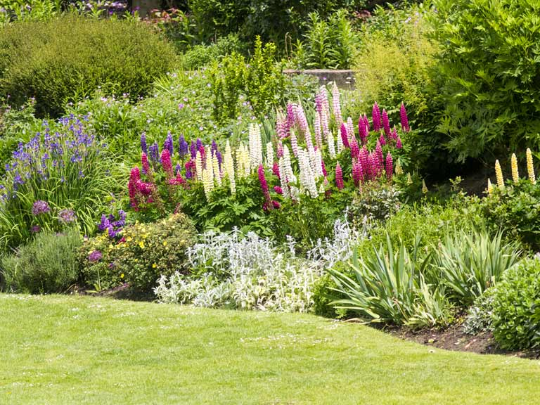 Top Tips And Ideas For A Better Garden Border Saga