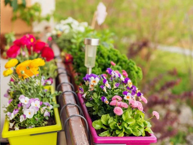 Gardening Ideas For Balconies Patios & Courtyards Saga