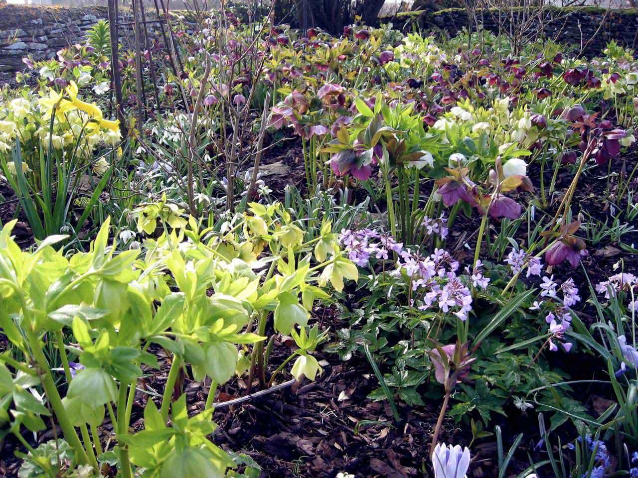 How To Design And Plant A Woodland Garden Saga