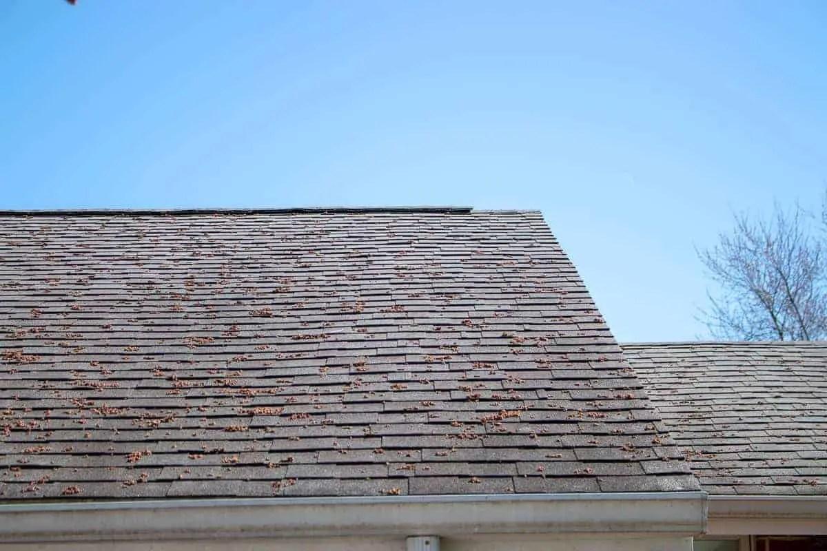 Photo of asphalt shingle roof with ridge vent