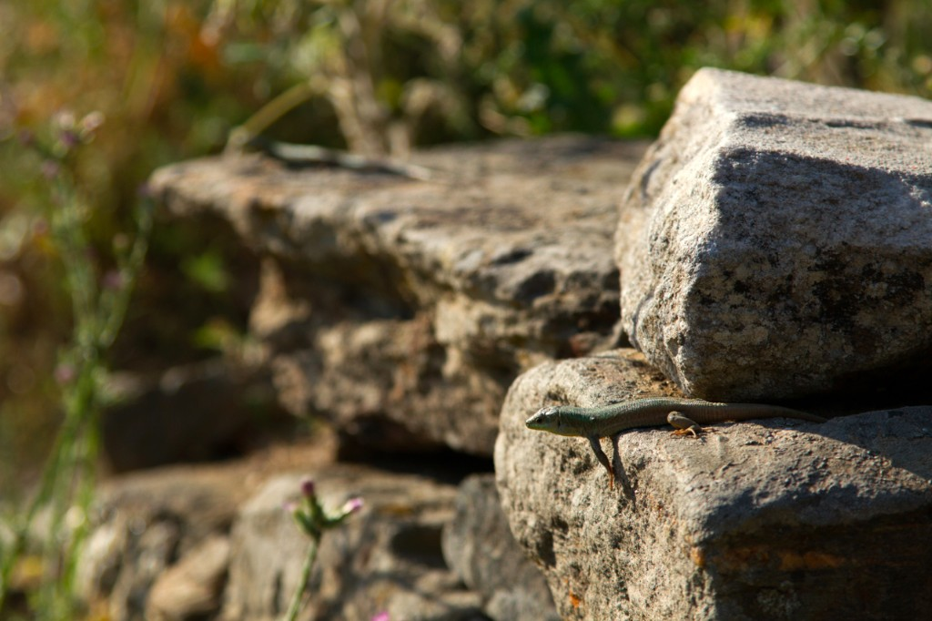 Image result for lizard stone wall